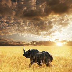 Rhino against a magnificent sky