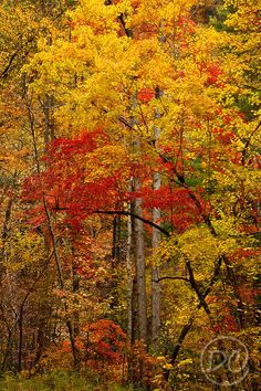 Fall Color Cherokee National Forest