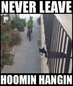 My cats would totally leave me hangin'.