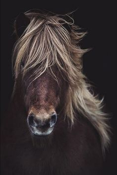 For once, the strong wind was useful - it caused nice movement in this horse's mane Horse Photos, Horse Pictures, Animal Pictures, All The Pretty Horses, Beautiful Horses, Animals Beautiful, Funny Animals, Cute Animals, Animals And Pets