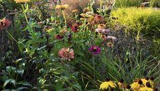 Byliny pełnią w tym ogrodzie najważnieszą funkcje - to one zapewniają mu zmienność, bogactwo kolorów i kwiatów Outdoors, Plants, Plant, Outdoor Rooms, Off Grid, Outdoor, Planets
