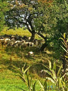 BIESZCZADY ZACHODNIE - Bieszczady - Wetlina - Karpaty Travel Pl Green Shades, Country Living, Us Travel, Croatia, Travel Ideas, Roots, Vineyard, National Parks, Meet