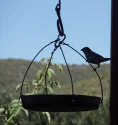 take an old cake tin, punch in 4 holes opposite another, wire up and voila! a bird feeder
