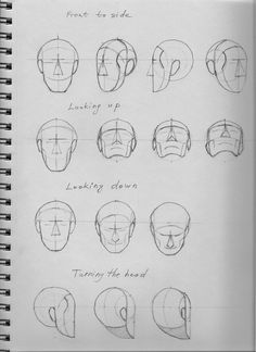 ...head and face structure
