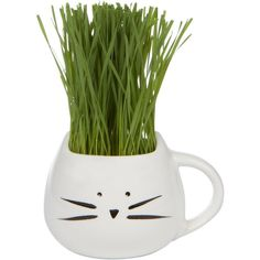 HOLIDAY GIFT SET Organic cat grass growing kit with cat grass planter. (960 RUB) ❤ liked on Polyvore featuring home, outdoors and garden tools