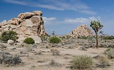 Joshua Tree National Park - Wikipedia, the free encyclopedia