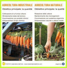 Differenza tra Agricoltura Industriale e Agricoltura Naturale