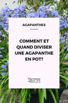 When and how to divide an agapanthus in a pot? Dream Garden, Garden Art, Diy Flowers, Flower Pots, Garden Online, Potager Garden, Plantation, Horticulture, Garden Projects