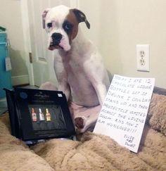 dog-shaming-drunk