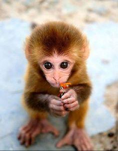 Cute Baby #Baby Animals #cute baby Animals| http://cute-baby-animals.lemoncoin.org