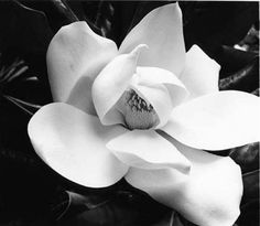 "Magnolia. What more can I say? Displaying leaves of the Magnolia represents not only your Southern Antebellum roots, but it means ""Remembrance"" Perfectly appropriate, don't you think?"