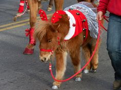 Christmas Horse Parade Holiday Horse Costumes