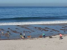 Carmel California: A top destination city in the US. Find things to do, get secret tips and discounts - written by locals who love Carmel - ILoveCarmelCA Carmel Beach, Carmel By The Sea, Stuff To Do, Things To Do, Carmel California, High Tide, Top Destinations, Waves