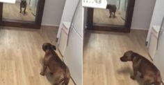 Dono flagra 'cão vaidoso' se admirando na frente do espelho