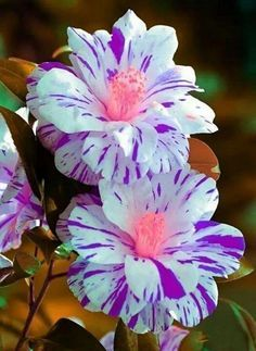 Help Make Your Garden Special - Easy Garden Plants - Orchideen Unusual Flowers, Wonderful Flowers, Rare Flowers, Types Of Flowers, Pretty Flowers, Colorful Flowers, Purple Flowers, Tropical Flowers, Yellow Roses