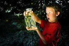 catching fireflies - Google Search