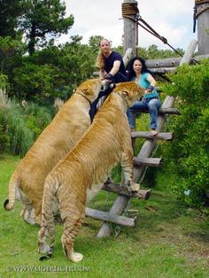 Liger @Megan Ward Godby see they are real!!!!!!!!!!