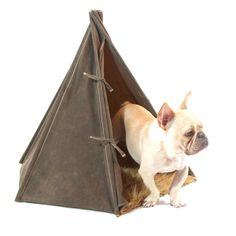 US Made Heavy Duty Pup Tents - coolest dog bed around!