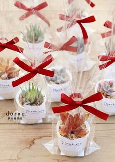 Darling Packaging delicate succulents, in addition to a wedding anniversary the return, birthday as a gift sent will be very special. Succulent Wedding Favors, Succulent Gifts, Wedding Favours, Party Favors, Succulent Ideas, Special Wedding Gifts, Wedding Giveaways, Thank You Gifts, Floral Arrangements