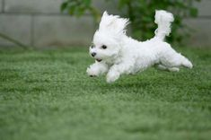 Cute Puppies Running - See more cute puppy pictures and dog training tips at TrainMyPuppies.com