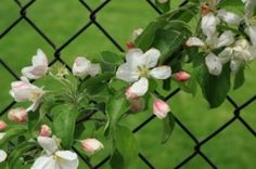 Painted Chain Link Fence with Flowers