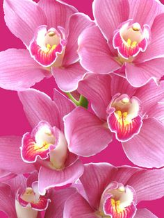 ~~Orchid Fantasy by Cher12861~~