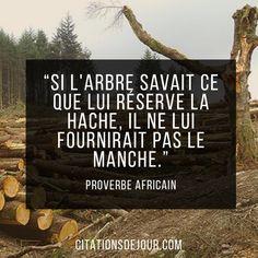 """""""Si l'arbre savait ce que lui réserve la hache, il ne lui fournirait pas le manche."""" Diouf Boucar"""