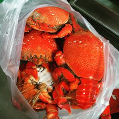 澎湖的美味#prawn #crab #iniistiusdea #oyster #seafood  #penghu #澎湖 #蟹膏炒飯 #澎湖絲瓜 #紅新娘魚 #我愛的菜