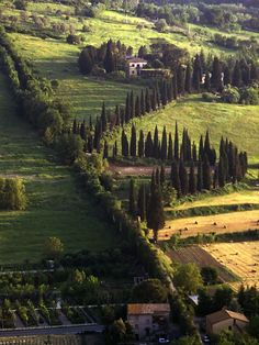 | ♕ |  Campagna di Orvieto, Italy  | by © dalem | via ysvoice - Love the tree spires in this landscape.