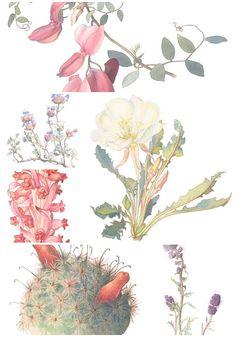 Watercolor Floral Image Collection - 25 INDIVIDUAL Vintage Flower PNG Images for Altered Art, Digital Scrapbooking - Printable Flower Images