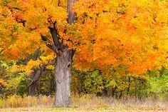 Kentwood's Grandpa Tree