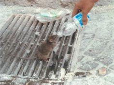 Questa foto è vera - un topo che beve dalla bottiglia offertagli da un vigile del fuoco al centro dell'Aquila 2009