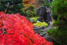 Fall colors in the Seike Japanese Garden, in SeaTac / Ellen M. Banner/The Seattle Times Seattle News, Seattle Times, Elderly Couples, Japanese Aesthetic, Weeding, Wwii, Banner, Memories, Fall