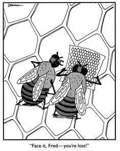 Google Afbeeldingen resultaat voor http://members.chello.nl/~d.steenredeker/Grappige-Plaatjes-2/Bijen.gif