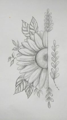 Sunflower pencil shading drawing