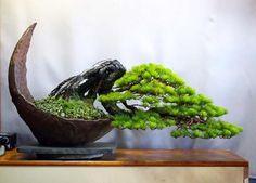 How many of you grow your bonsai like this? Succulent Bonsai, Terrarium Plants, Bonsai Garden, Garden Trees, Trees To Plant, Bonsai Tree Types, Indoor Bonsai Tree, Bonsai Trees, Pine Bonsai