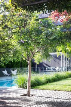 feature Jacaranda tree surrounded by timber decking