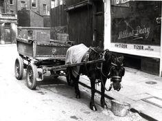 Barandon Street horse and cart 1969