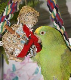 Parrot Enrichment Ideas | Parrots