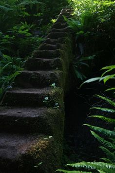 Steps in the Westcoast Trail, Vancouver Island, B.C.