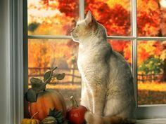 Cat in window in autumn - window, feline, fall, autumn, pumpkin, fruit, vegetable, fence, kitten, cat, sweet