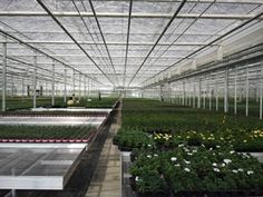 Completed Greenhouse & Other Projects by Bridge Greenhouses Roller Shutters, Glass House, Greenhouses, High Level, Potted Plants, The Expanse, Acre, Bench, Nursery