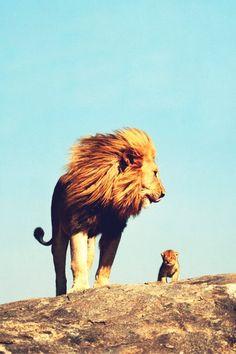 Mufasa & simba!