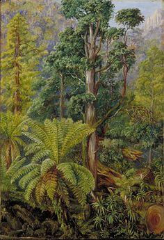 View of the Forest on Mount Wellington, Tasmania Marianne North - circa Botanical Drawings, Botanical Illustration, Botanical Prints, Landscape Art, Landscape Paintings, Landscapes, Marianne North, Tropical Art, Tropical Forest