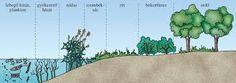 """Képtalálat a következőre: """"vizek élővilága feladatlap"""" Nature Study, Teaching, Education, School, Plants, Natural History, Plant, Onderwijs, Learning"""