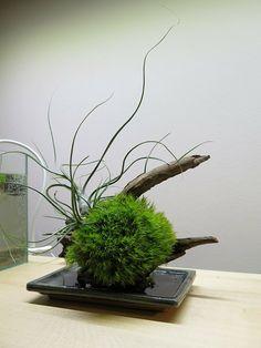 Das japanische Ikebana und das Kokedama miteinander kombinieren