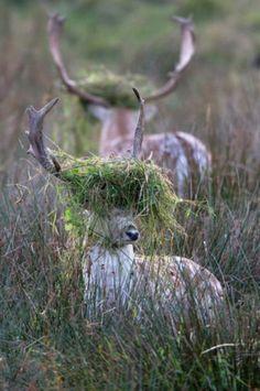 ..crazy deer.. I'm undercover