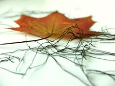 leaves, threads Leaves, Abstract, Artwork, Work Of Art