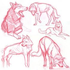 Wolf drawing. I just really love wolves
