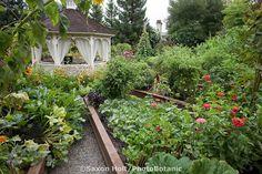 Raised bed garden of edible landscaping (Vegetables,flowers, herbs) designed around gazebo